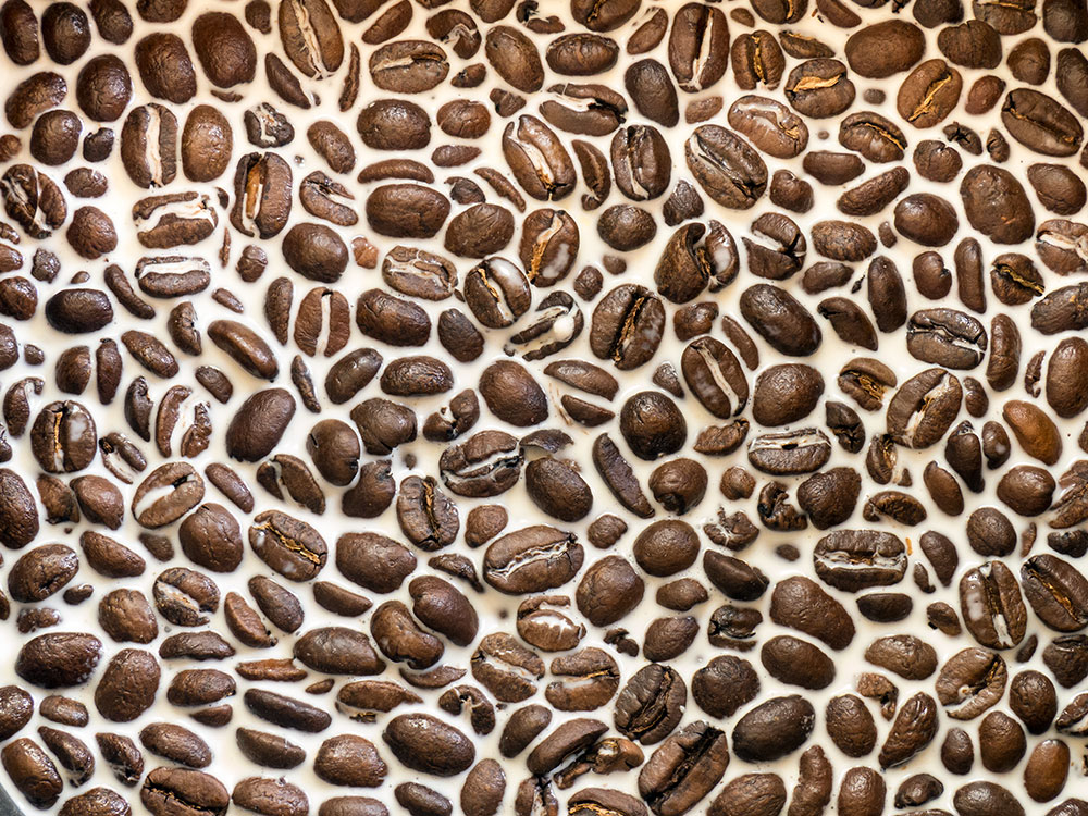 Coffee beans steeping in warm milk